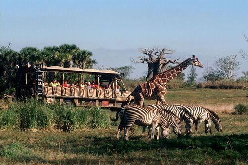 wdw-ak-safari-582d101f3df78c6f6ad5ad6d_1